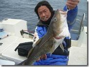 真鱈shimataka