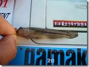 ?なお魚さん
