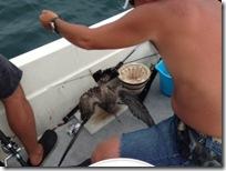 ウミネコ釣っちゃった画像