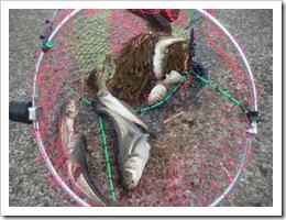 2007.1.1 ハタハタ漁 (7)