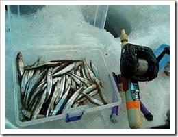 ワカサギ釣り2008.2.18 (2)