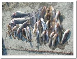 2008.3.9釣果