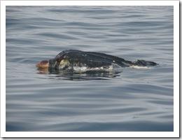 2008.8.13 海亀