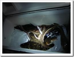 2008.9.14夜釣り