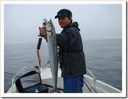 2008.9.8.jpg サワラ